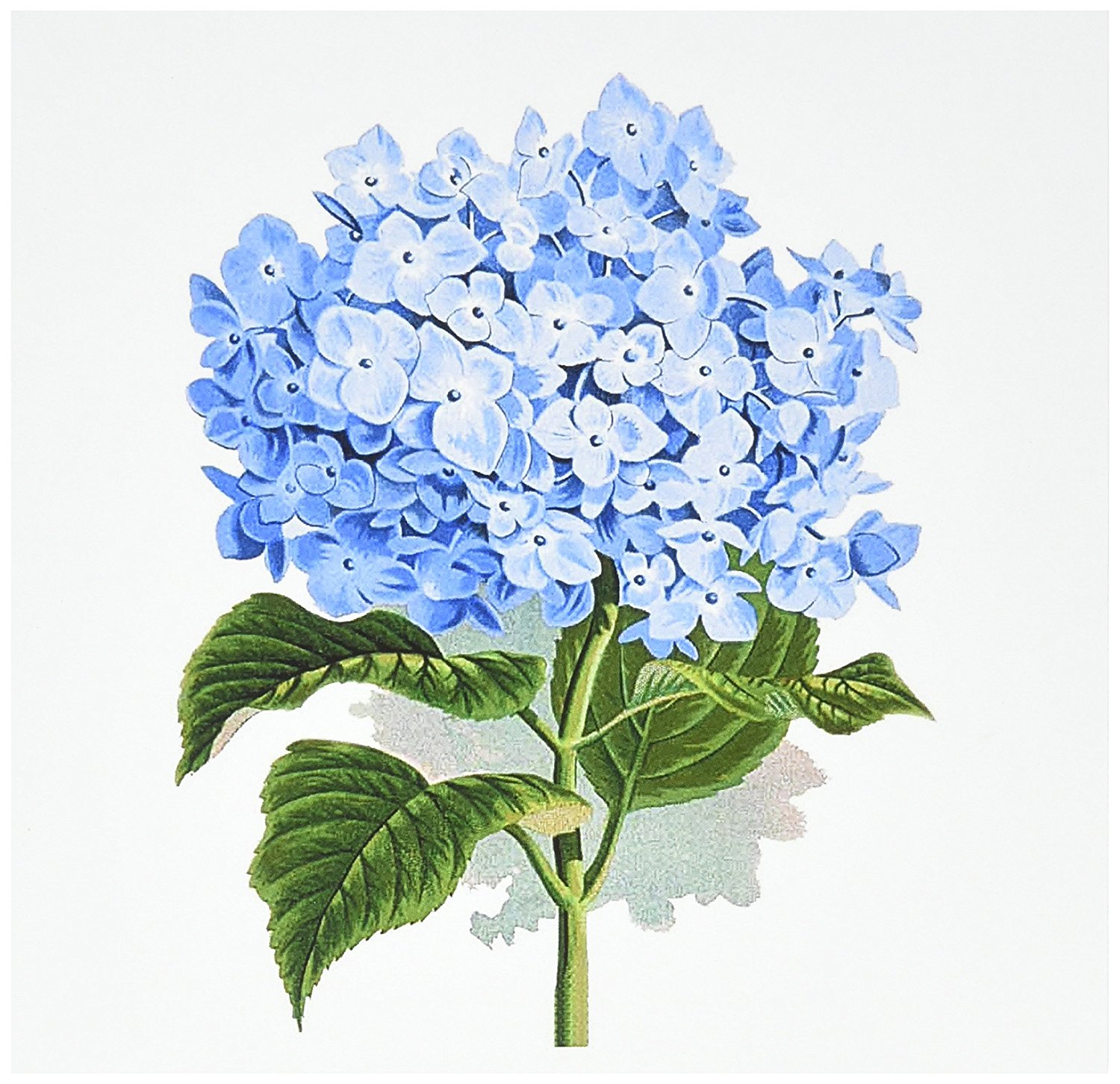 Cheap drawing board greeting cards find drawing board greeting get quotations 3drose blue hydrangea flowers vintage art floral drawing summery flowery spring antique m4hsunfo