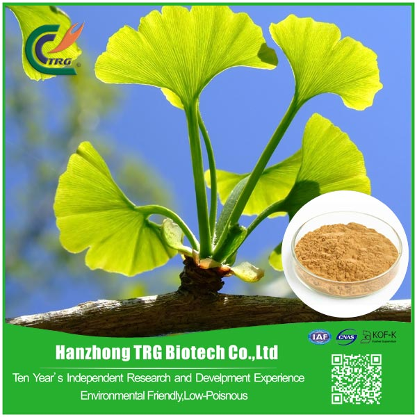 factory direct ginkgo biloba liquid extract with low price