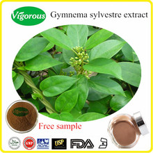 Pure natural Gymnema sylvestre extract/Gymnema sylvestre extract powder/Gymnema extract