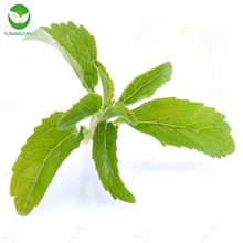 Factory price pure organic Stevia dry leaves extract in bulk/Stevia rebaudiana powder