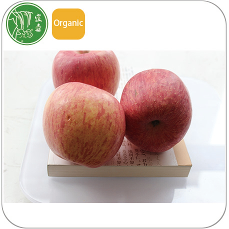 organic products name red fuji apple from manufacturer