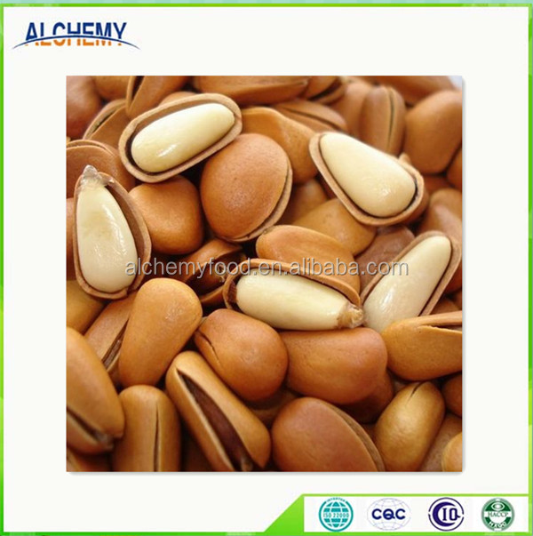 pine nut processing high quality with lower price