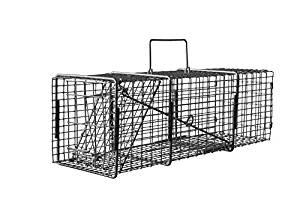 10x12x32 Professional Single Door Heavy Duty Raccoon Trap T101232P