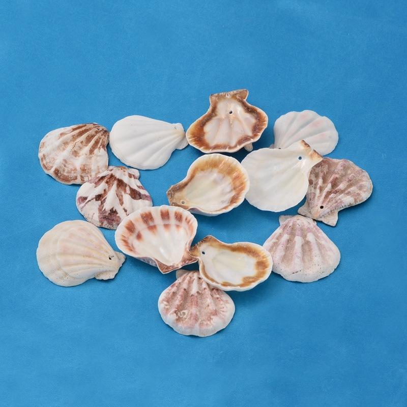 PandaHall Dyed Goldenrod Sea Shell Beads