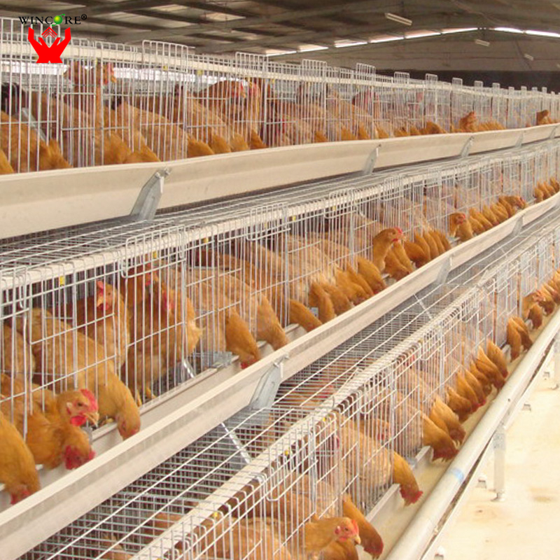 High quality low cost automatic poultry farm hen layer cage