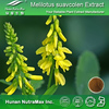 Best Selling Sweet Clover Extract,Sweet Clover Extract Powder,Sweet Clover P.E.(Extract Ratio:4:1-20:1)