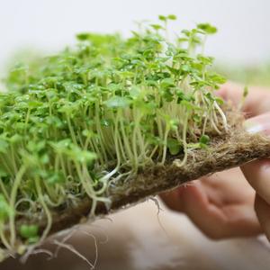 flax fiber grow mats for microgreen