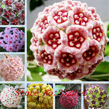 Hot Sale 2015 20 Colors Rare hoya seeds Flower Seeds 50pc/pack Bonsai Seeds for Home & Garden Free Shipping