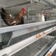 automatic poultry welded wire mesh kenya layer uganda egg chicken cage for sudan farms types of sale