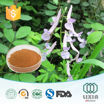 Hot selling GMP OEM factory supply High Quality natural Corydalis extract powder,Tetrahydropalmatine, corydalis yanhusuo extract