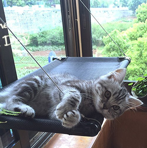 Prime Cheap Cat Window Bed Find Cat Window Bed Deals On Line At Andrewgaddart Wooden Chair Designs For Living Room Andrewgaddartcom