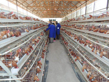 how to start poultry farming in malaysia
