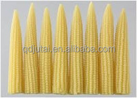cheap canned fresh sweet yellow baby corn