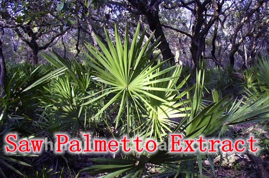 Vitamins enlarged prostate, saw palmetto extract hs code hk