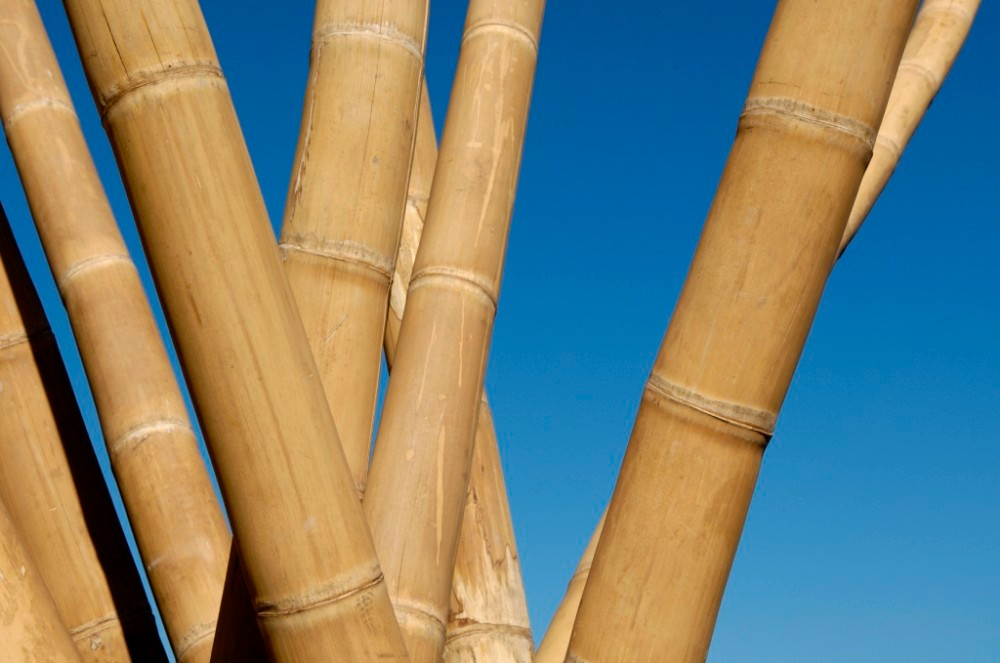Large Bamboo Poles ~ Giant large artificial wholesale big natural yellow