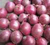Good Quality & Lowest price Red Onion