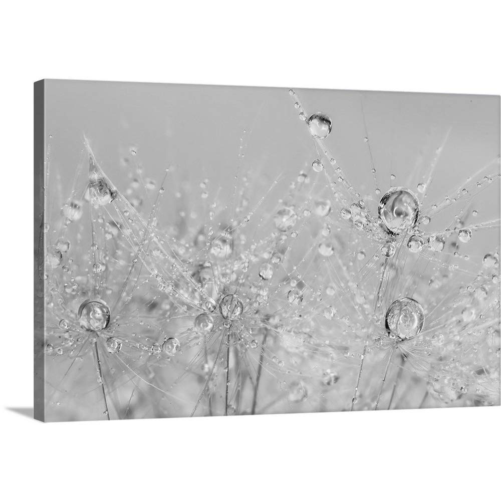 "GREATBIGCANVAS Gallery-Wrapped Canvas Entitled Dandelion Dew Black and White II by Cora Niele 48""x32"""