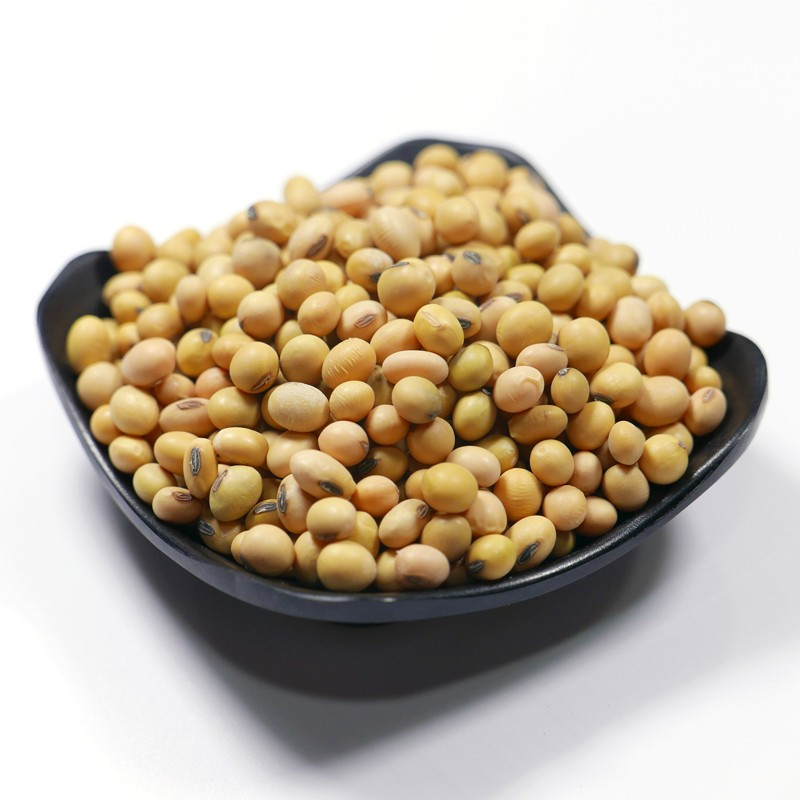 Purely natural NON-GMO green kernel Black Soybean seed 6.0mm size up wholesale