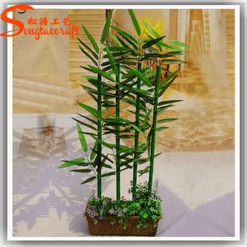 Atacado Indoor Planta De Bambu Chinês Para A Decoração Da Casa De ...