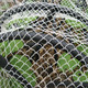 pe anti bird net for Orchard