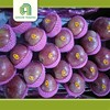 Hot selling sweet qinguan apple fruit with low price