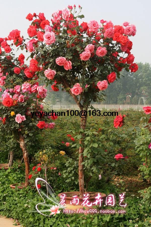 Online Buy Wholesale flower trees from China flower trees
