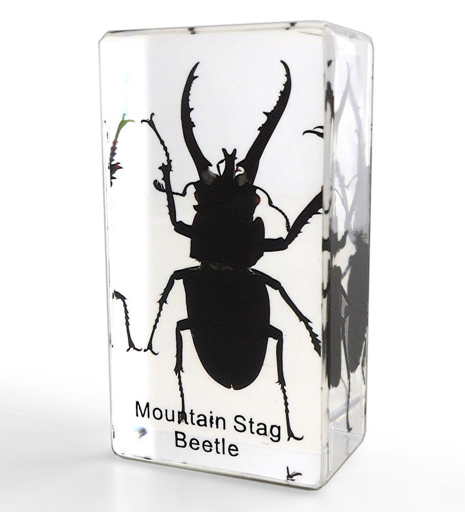 Lucite Treasures Mountain Stag Beetle Paperweight a94013b06