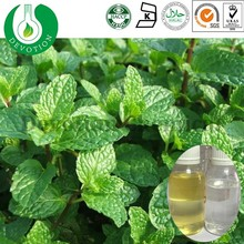 OEM 100% Pure Natural Steam Distilled Extraction Essential Peppermint Oil