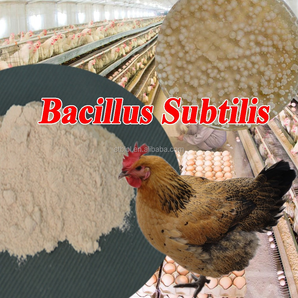 Feed Grade harmless animal probiotic Bacillus Subtilis