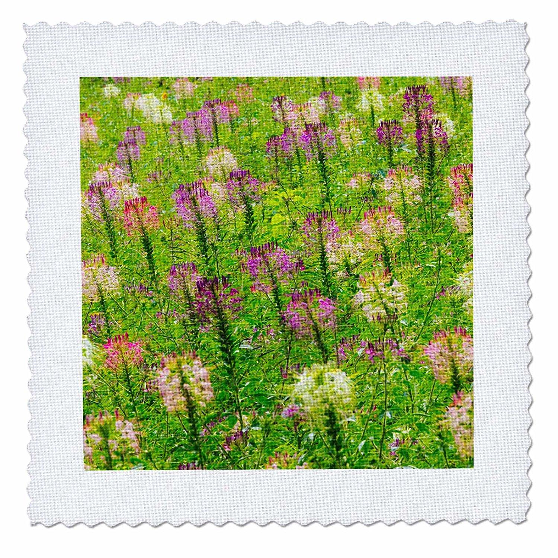 3dRose Danita Delimont - Flowers - Flowers in the flower farm, Furano, Hokkaido Prefecture, Japan - 22x22 inch quilt square (qs_276890_9)