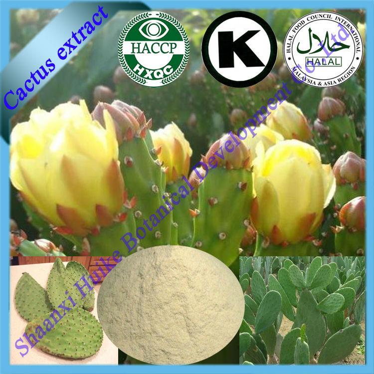 Natural Hoodia Gordonii Cactus Flower Extract Powder Buy Cactus