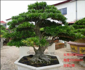Decorative Pine Trees Decoration For Home