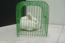 rabbit cage with feeding trough,water tank