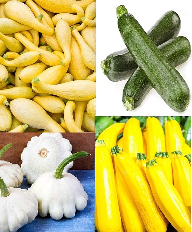 Squash Summer Medley 25 Gold Zucchini / 25 Gray Zucchini / 25 Black Beauty Zucchini / 25 White Scallop Squash Seeds