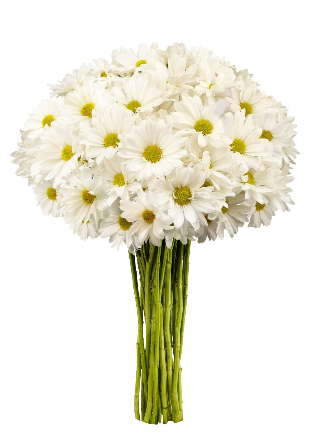 Cheap Flowers Under 20 Find Flowers Under 20 Deals On Line At