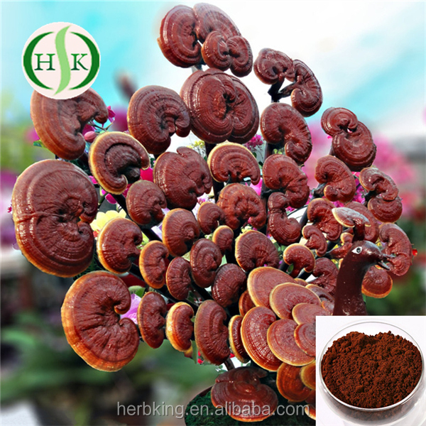Factory Outlet Triterpenoidal Saponin From Reishi Mushroom