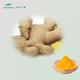 Water Soluble Ginger Extract 1% Gingerol with Competative Price