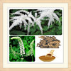 black cohosh root extract powder/(top quality)black cohosh extract/black cohosh p e
