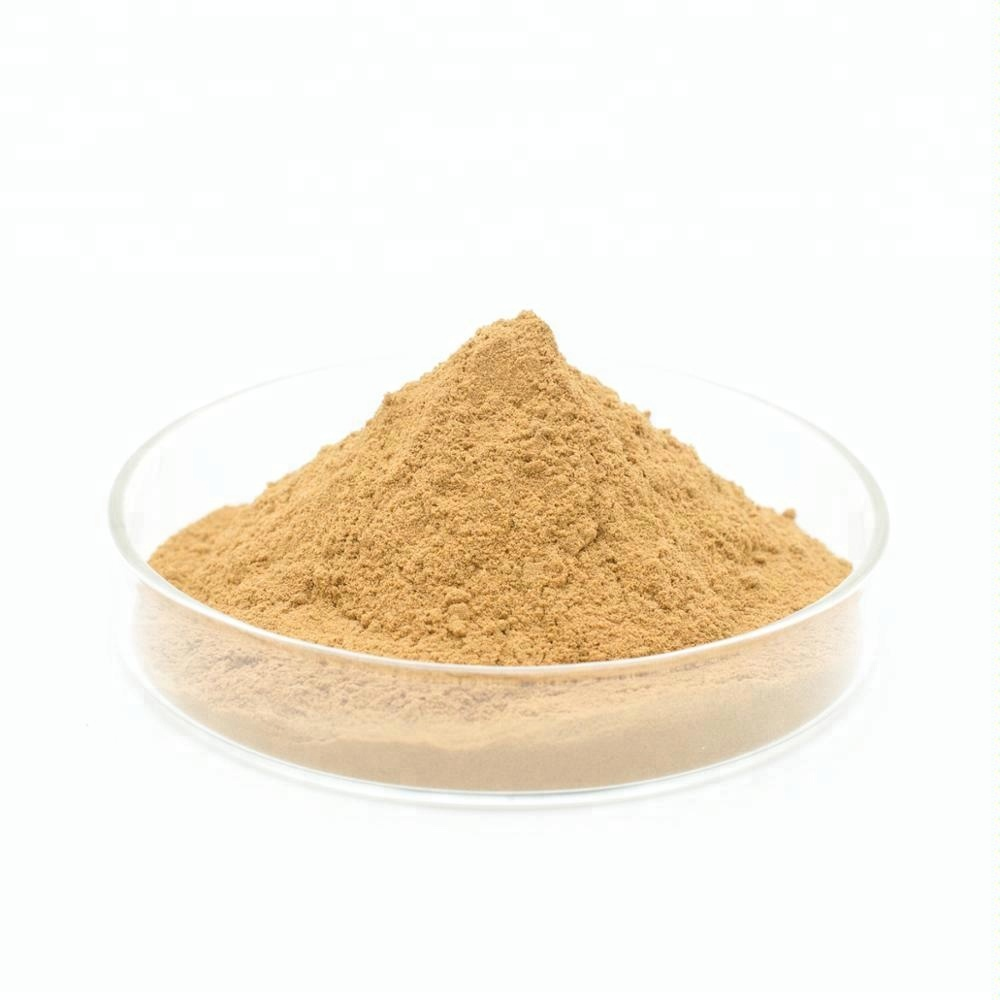 100% Herbal Ginkgo Biloba Extract Powder 10:1