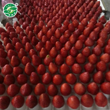 China products good iqf frozen strawberry