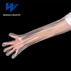 Specialized farms use disposable plastic shoulder length Veterinary gloves