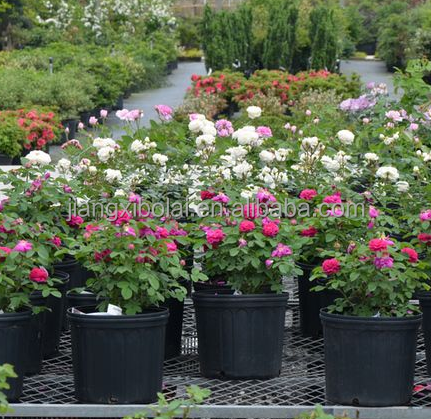 nursery pots used nursery pots nursery pots 5 gallon