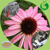 Best echinacea purpurea extract chicoric acid powder