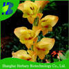 Easy growing gladiolus bulbs for sale
