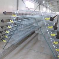 Automatic quail bird layer cage system