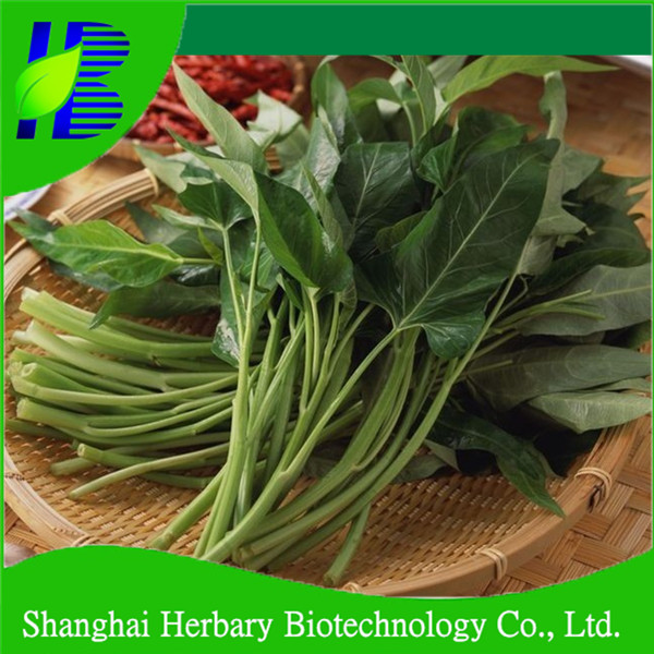 2018 Top quality water spinach seeds