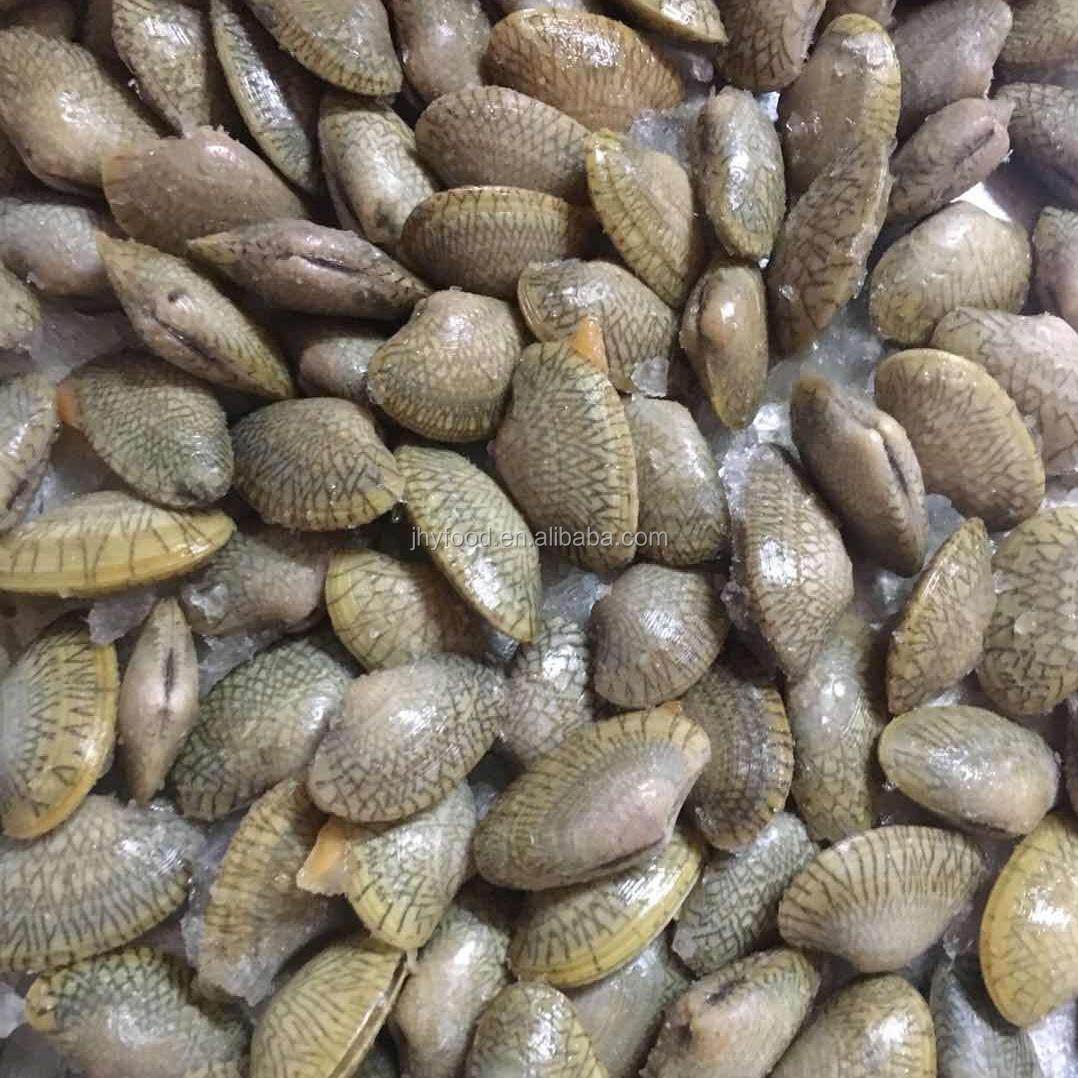 Atacado Congelados Amêijoas Carne Boa Venda Marisco Shell Peixe