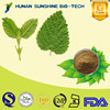Natural Lemon Balm Extract 3% / 5%Rosmarinic Acid