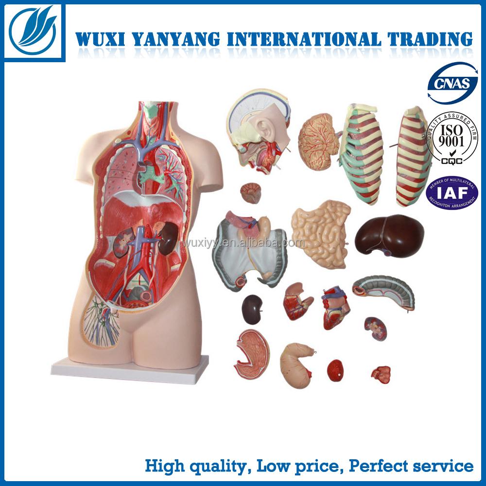 Venta al por mayor anatomia cuerpo humano y sus partes-Compre online ...