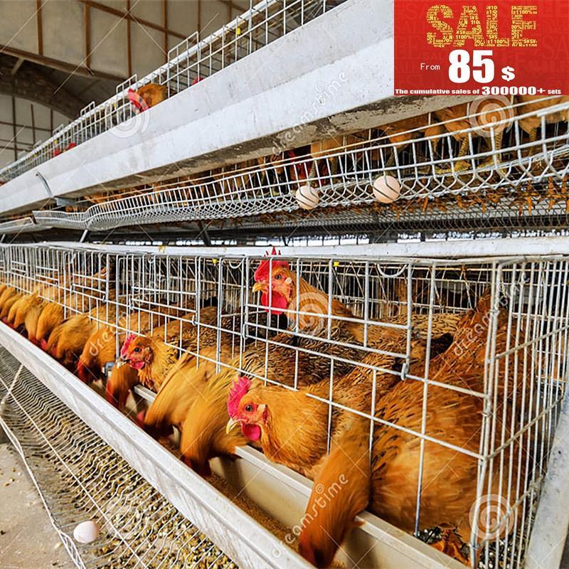automtico de pollo capa jaula de pjaros